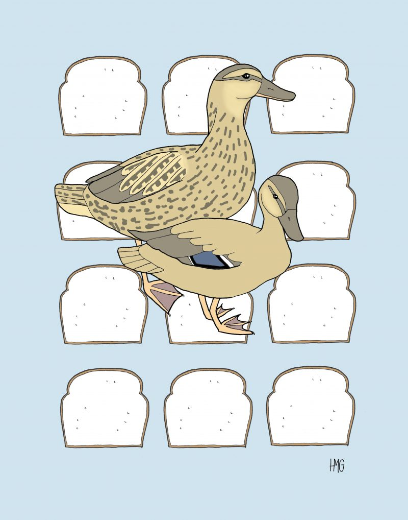 Duck Duck Bread