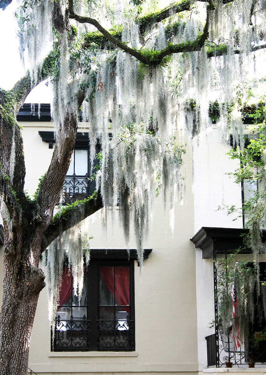 Travel Series: Historic Savannah 2020