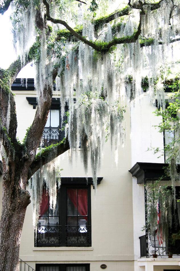 Historic Savannah 2020